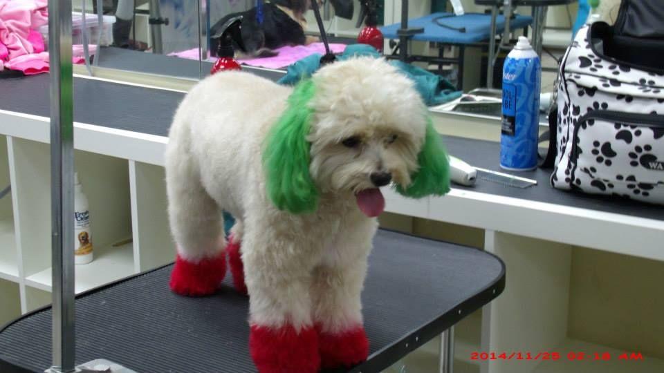 Dog Grooming School Victoria Bc