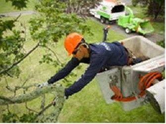 Tree Trimming And Removal In Toledo Oh Toledo Tree