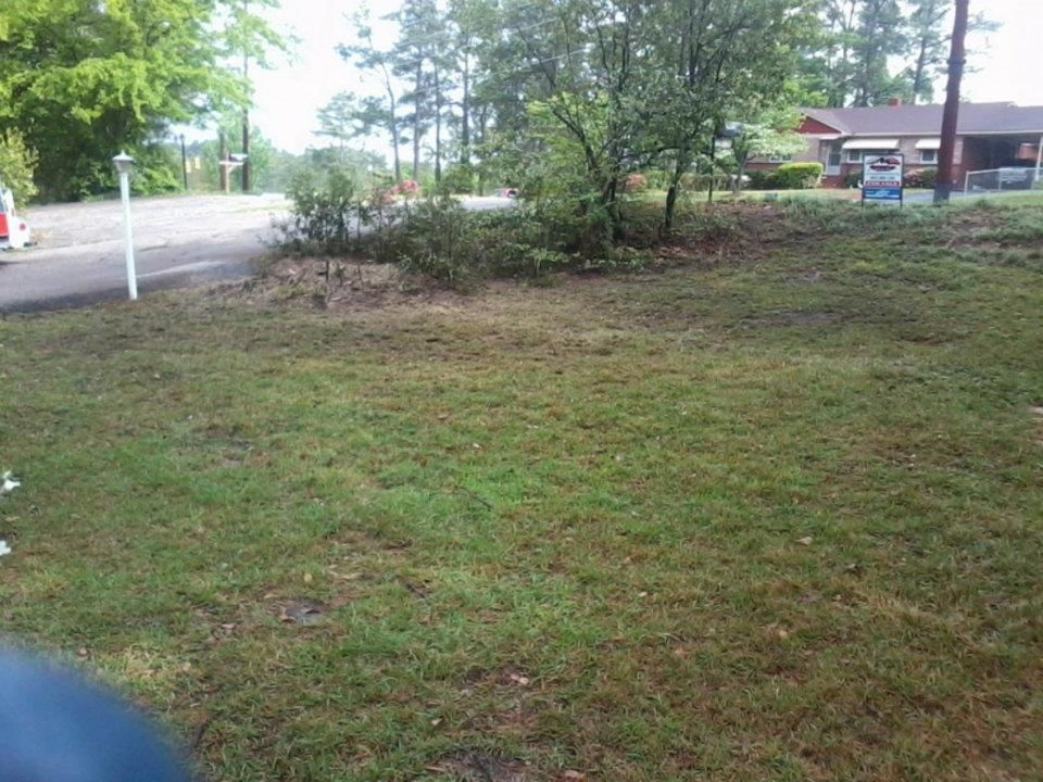 Safe And Reliable Tree Service In Pelion Sc Angry