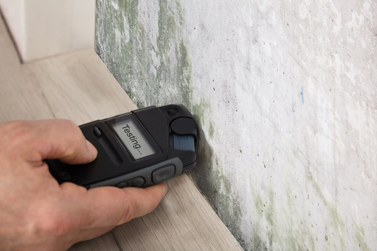 Professional inspecting and testing for mold