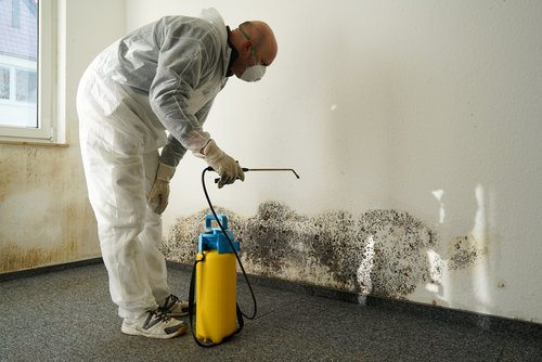 Professional using antifungal and antimicrobial cleansers to remediate mold in a wall
