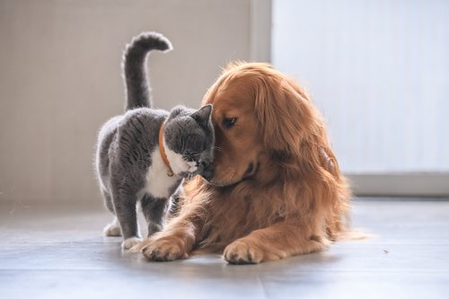 Lovely scene of a soft gray cat playing with a brown dog in a pet-proofed house