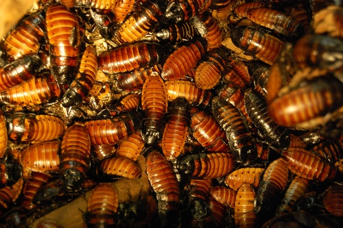 Cost To Hire A Roach Exterminator Estimates And Prices