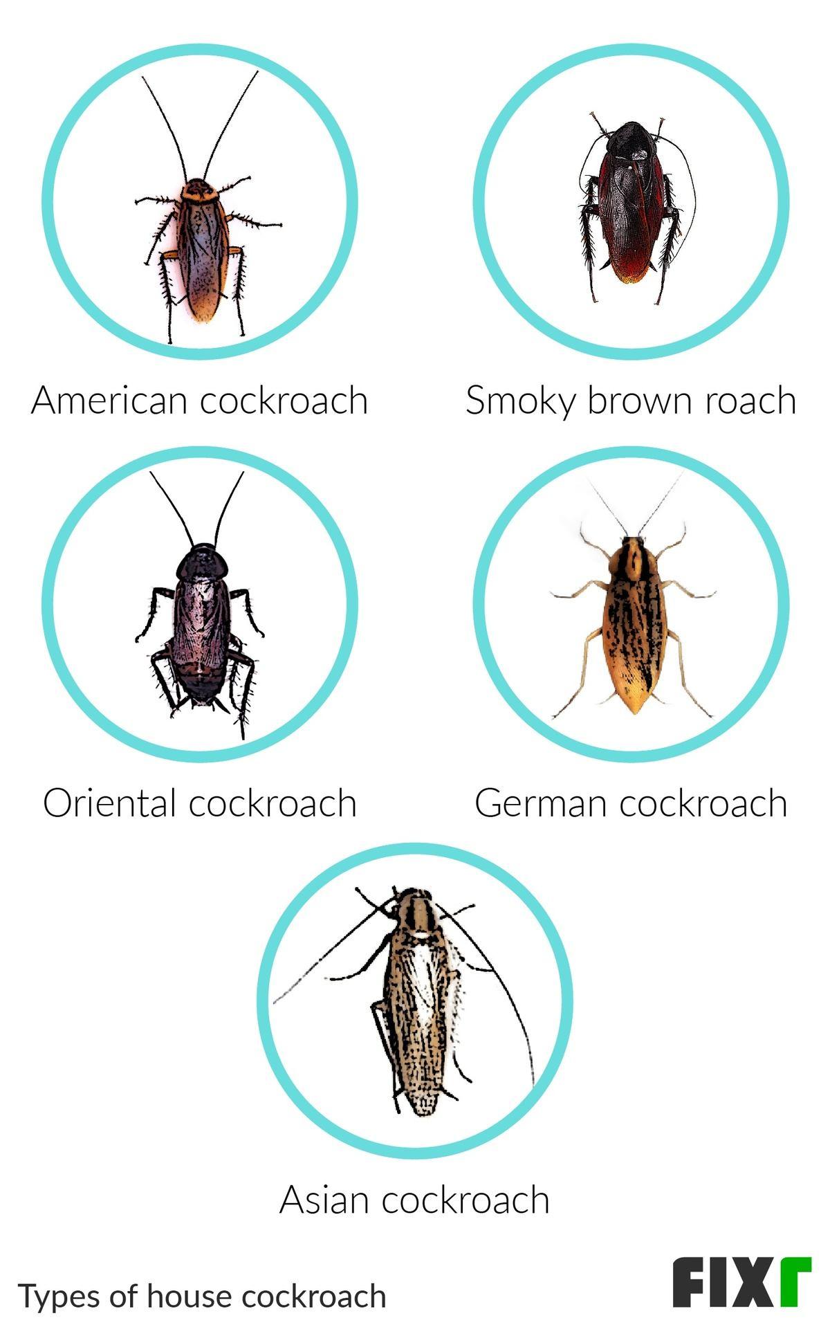 2021 Roach Exterminator Cost Roach Treatment Cost