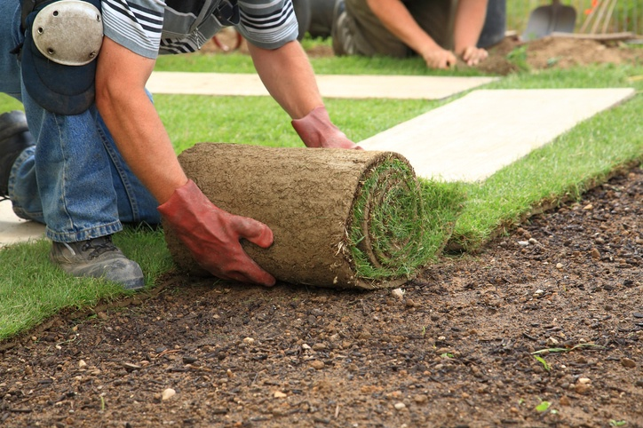 Landscaper laying a roll of sod for a new lawn