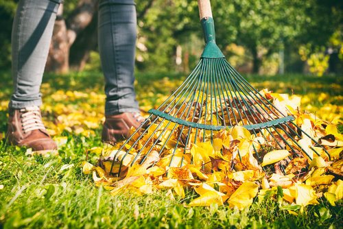 Gardener woman cleaning up autumn leaves in the yard